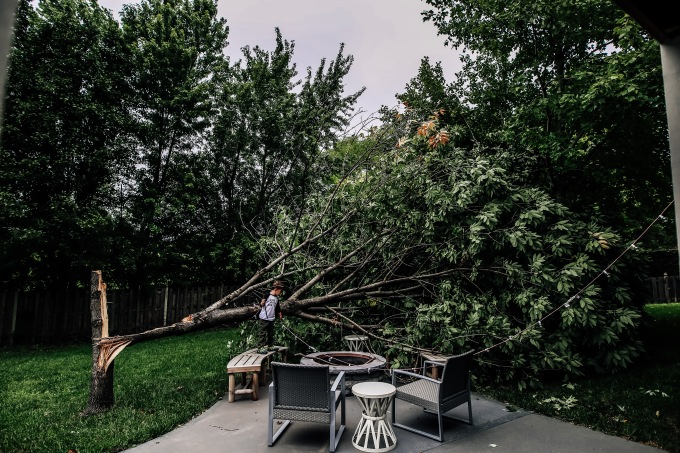 Backyard Tree Boy Summer Courtney MaCaire Photography Kansas City