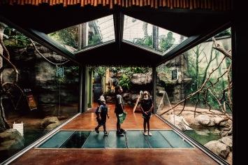 Kansas City Zoo family children summer monkeys windows indoor light