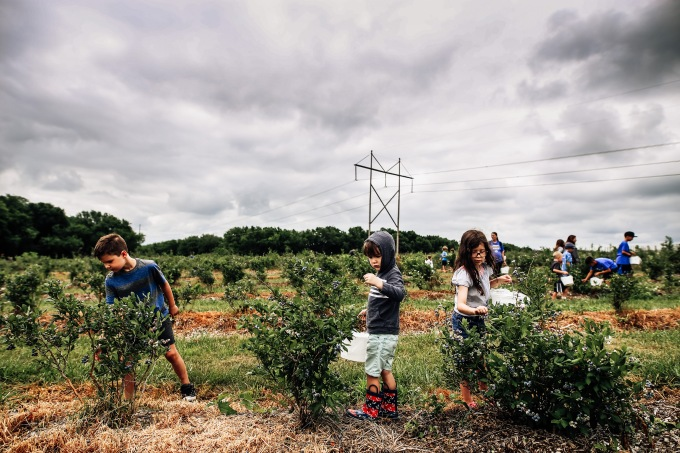 Kansas City summer blueberry picking gieringers orchard children clouds sky